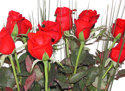Romance with Long Stemmed Roses