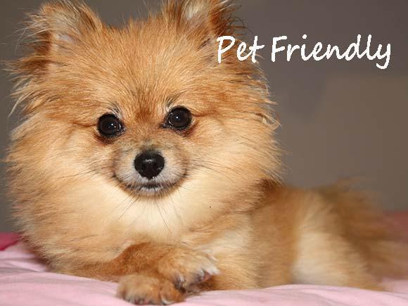 Dog Friendly Atherton
